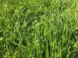 Viherrakentaminen - nurmikon kylvö tai siirtonurmikko • Maanrakennus T.Virtanen Oy - Tampere